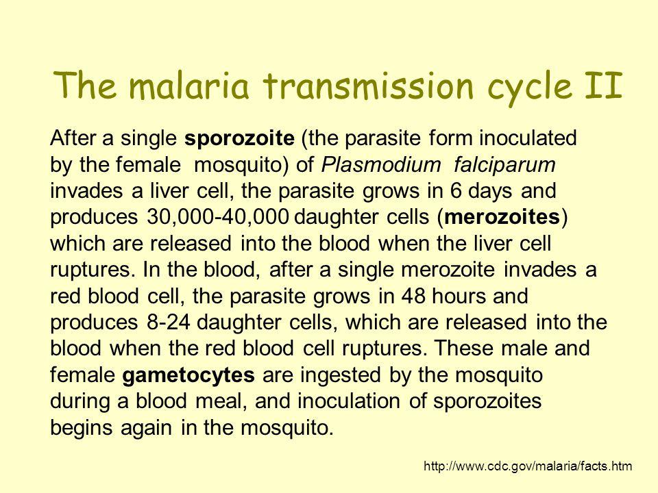 The malaria transmission cycle II