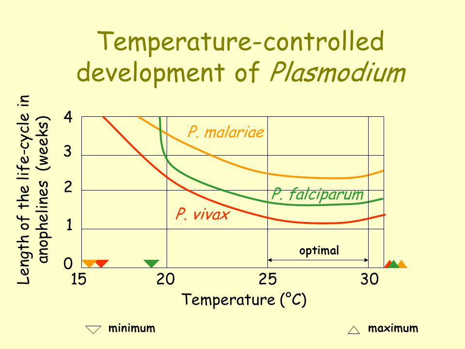 Temperature-controlled development of Plasmodium