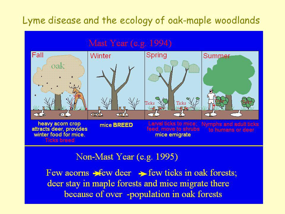 Lyme disease and the ecology of oak-maple woodlands