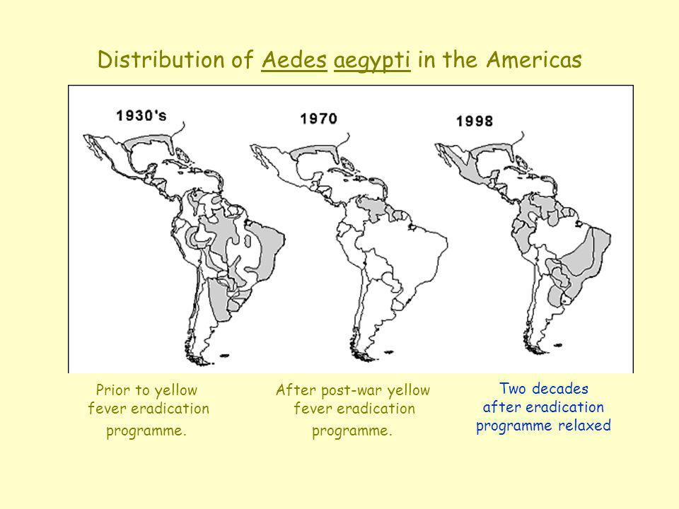 Distribution of Aedes aegypti in the Americas