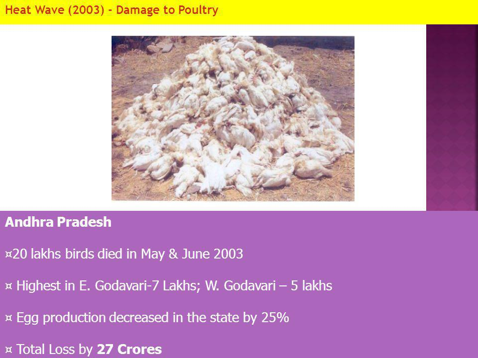 20 lakhs birds died in May & June 2003