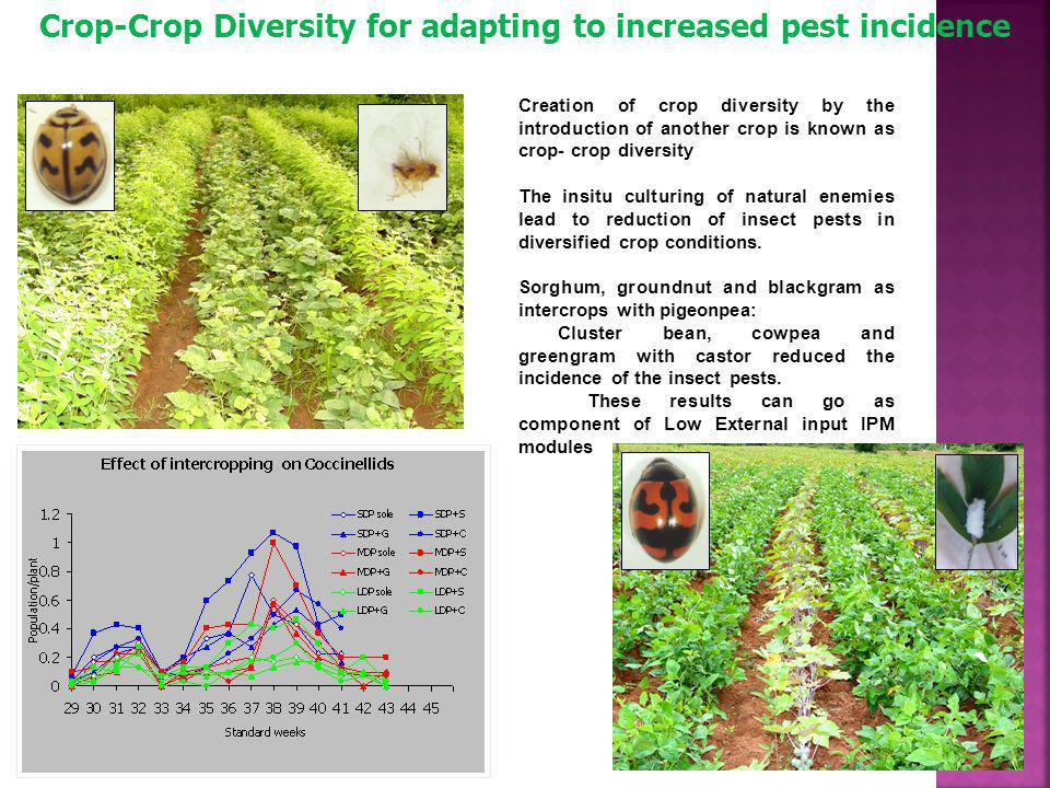 Crop-Crop Diversity for adapting to increased pest incidence