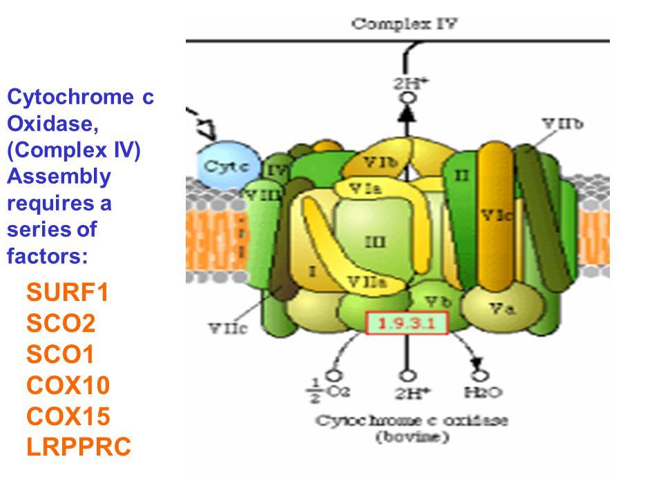 SURF1 SCO2 SCO1 COX10 COX15 LRPPRC Cytochrome c Oxidase, (Complex IV)