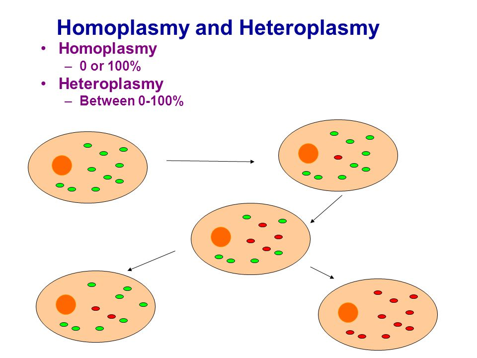 Homoplasmy and Heteroplasmy