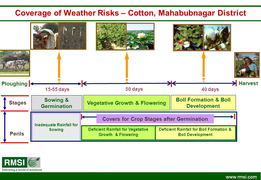 Coverage of Weather Risks – Cotton, Mahabubnagar District