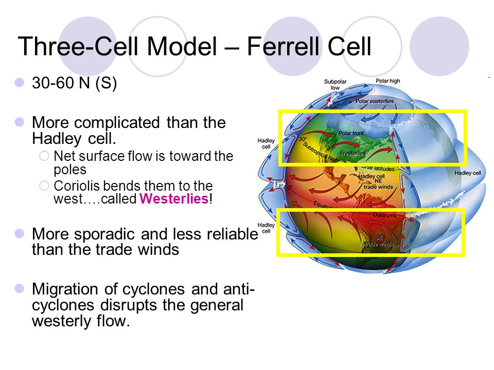Three-Cell Model – Ferrell Cell