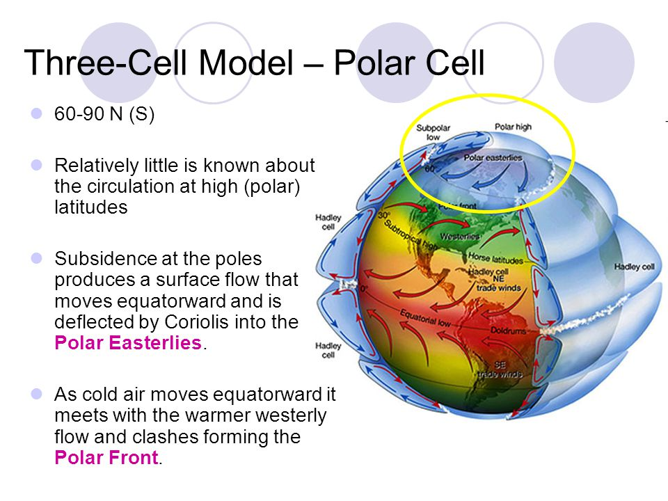 Three-Cell Model – Polar Cell