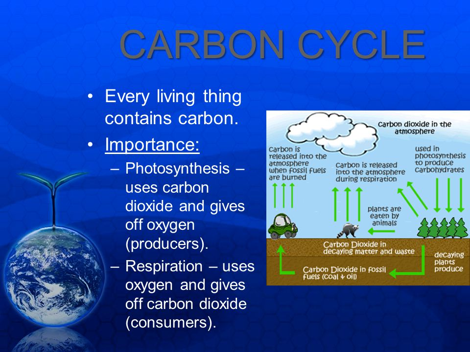CARBON CYCLE Every living thing contains carbon. Importance: