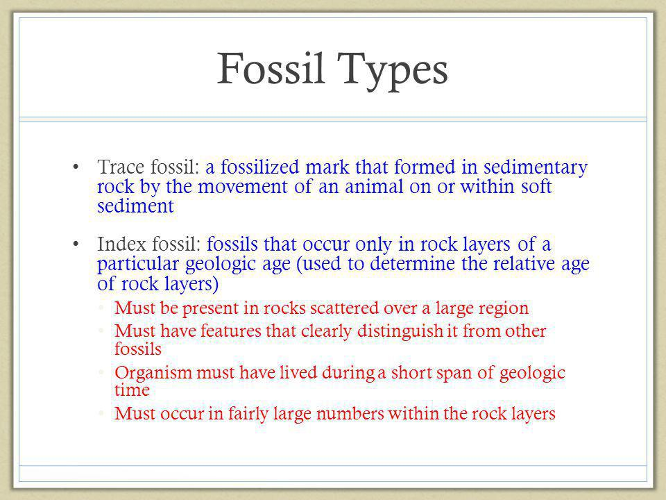 Fossil Types Trace fossil: a fossilized mark that formed in sedimentary rock by the movement of an animal on or within soft sediment.