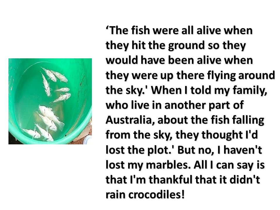 'The fish were all alive when they hit the ground so they would have been alive when they were up there flying around the sky. When I told my family, who live in another part of Australia, about the fish falling from the sky, they thought I d lost the plot. But no, I haven t lost my marbles.