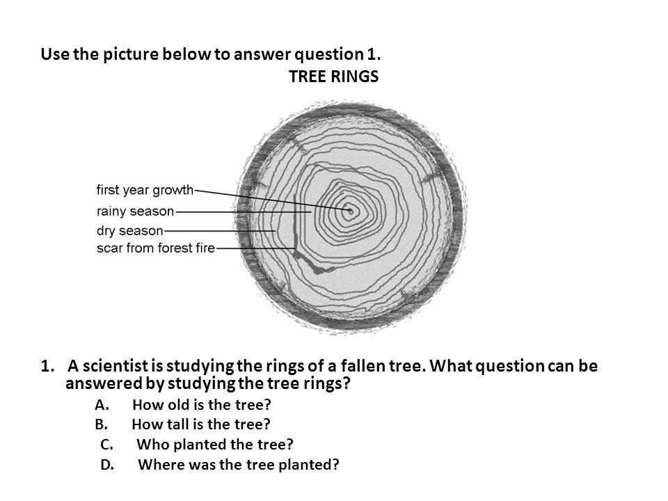 Use the picture below to answer question 1. TREE RINGS