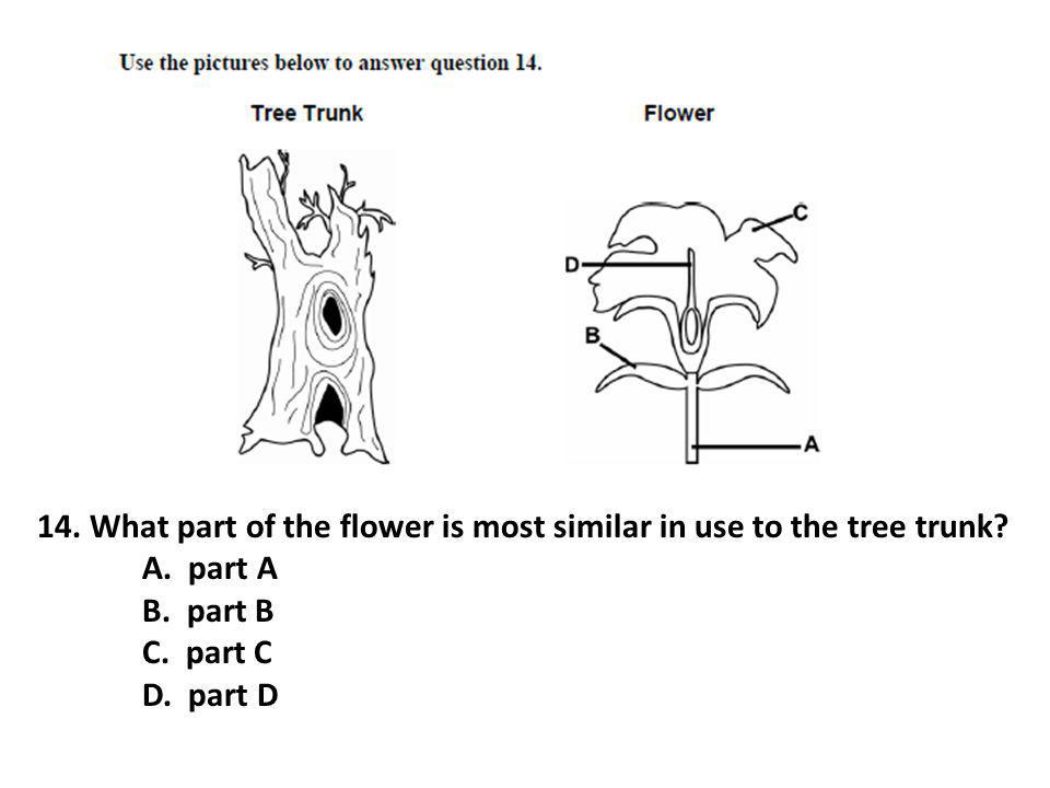 14. What part of the flower is most similar in use to the tree trunk