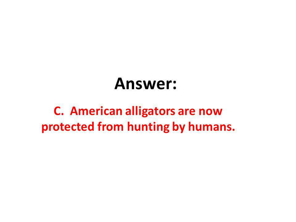 C. American alligators are now protected from hunting by humans.