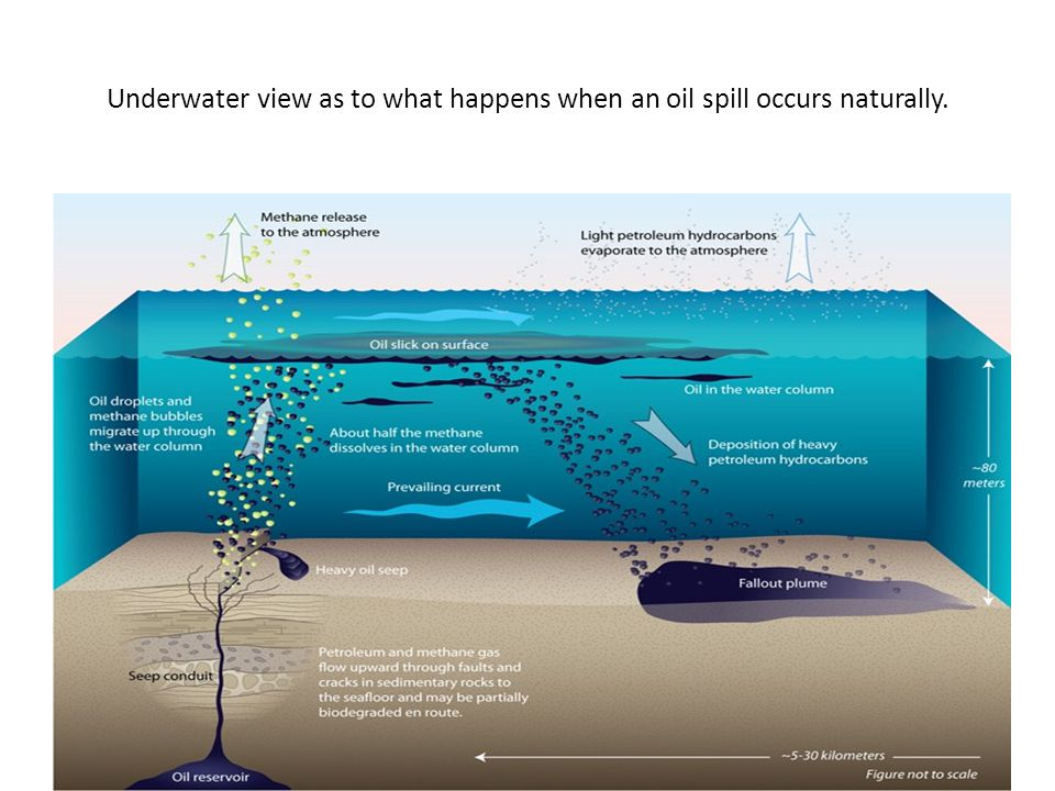 Underwater view as to what happens when an oil spill occurs naturally.