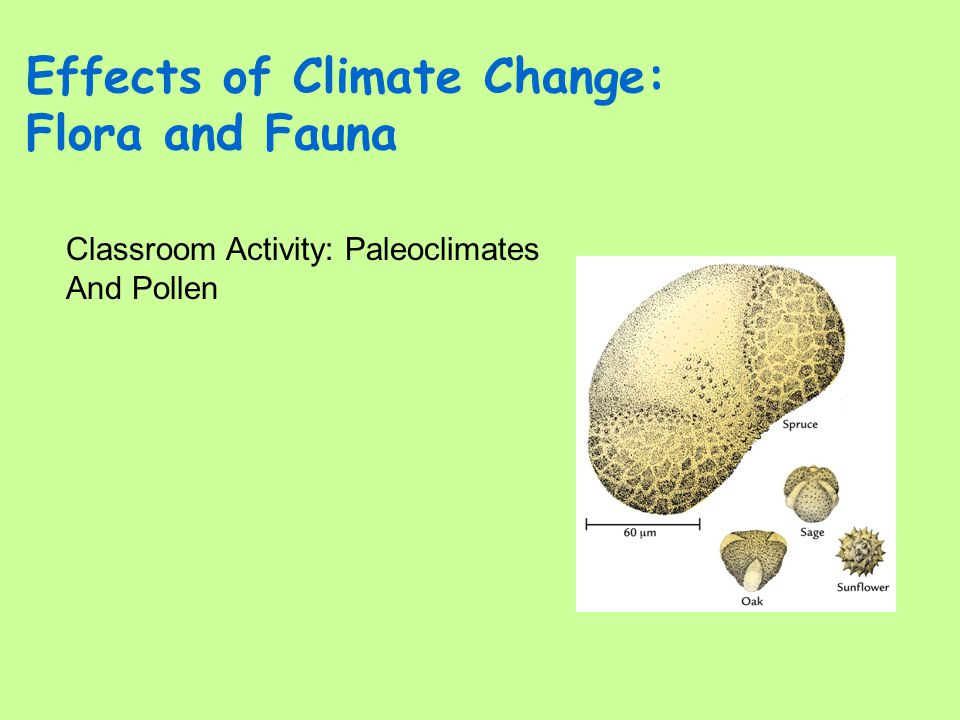 Effects of Climate Change: Flora and Fauna