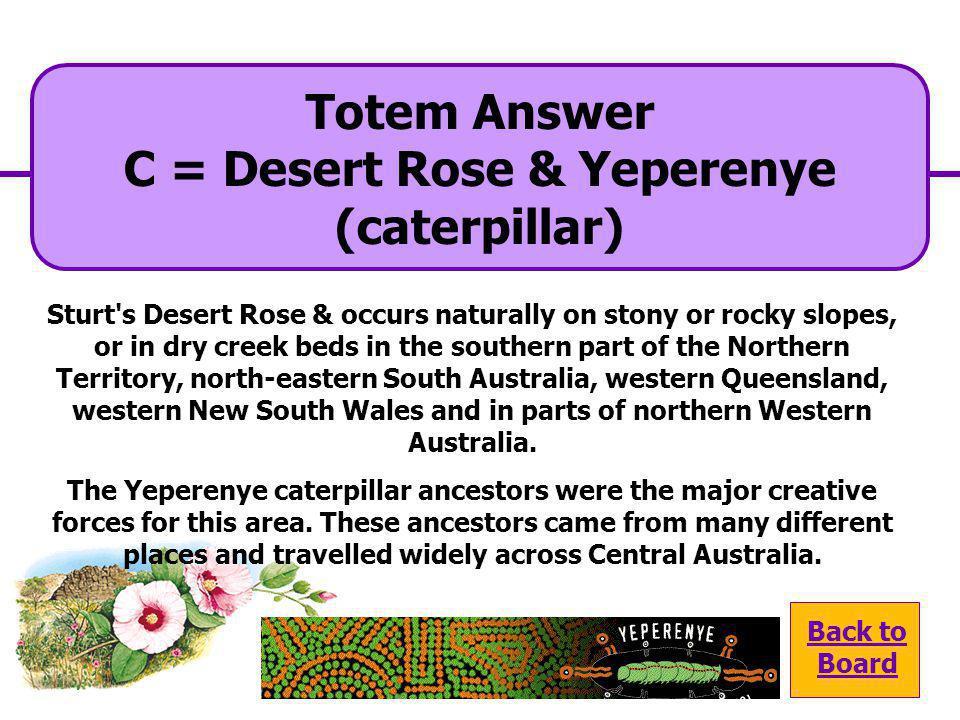 C = Desert Rose & Yeperenye (caterpillar)