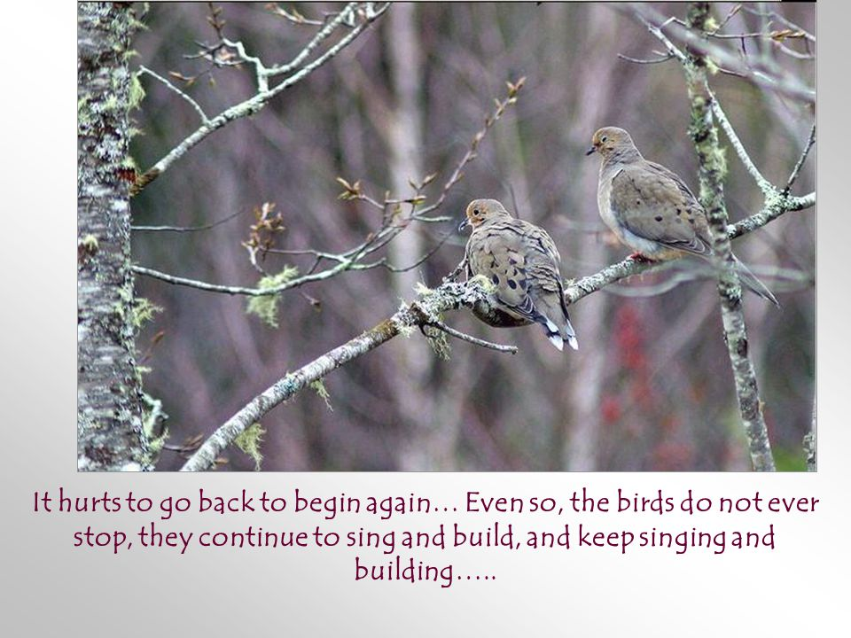 It hurts to go back to begin again… Even so, the birds do not ever stop, they continue to sing and build, and keep singing and building…..