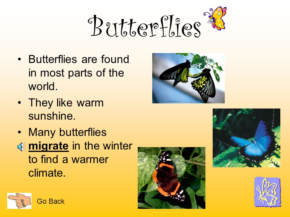 Butterflies Butterflies are found in most parts of the world.