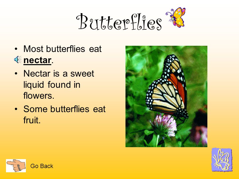 Butterflies Most butterflies eat nectar.