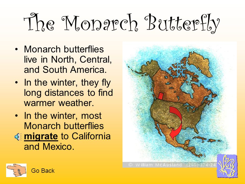 The Monarch Butterfly Monarch butterflies live in North, Central, and South America. In the winter, they fly long distances to find warmer weather.