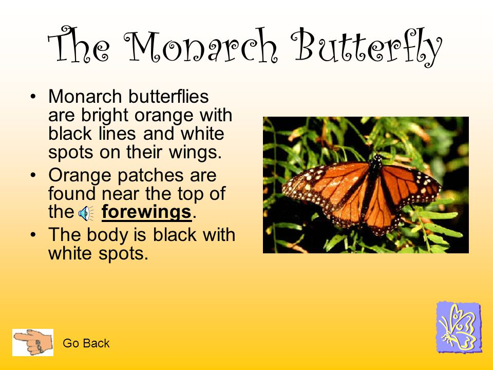 The Monarch Butterfly Monarch butterflies are bright orange with black lines and white spots on their wings.