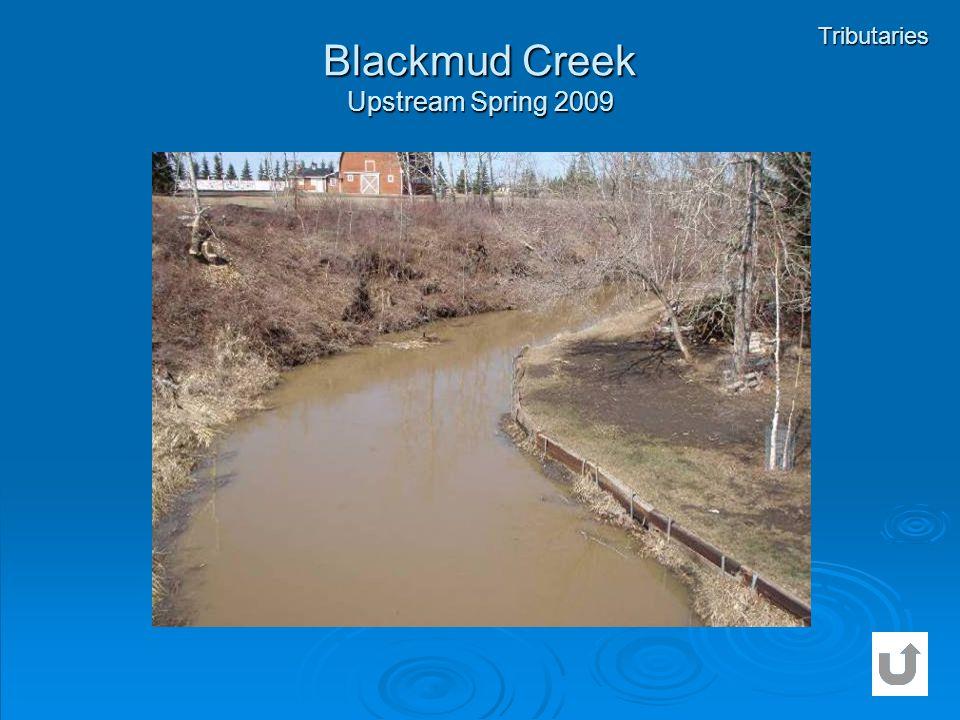Blackmud Creek Upstream Spring 2009