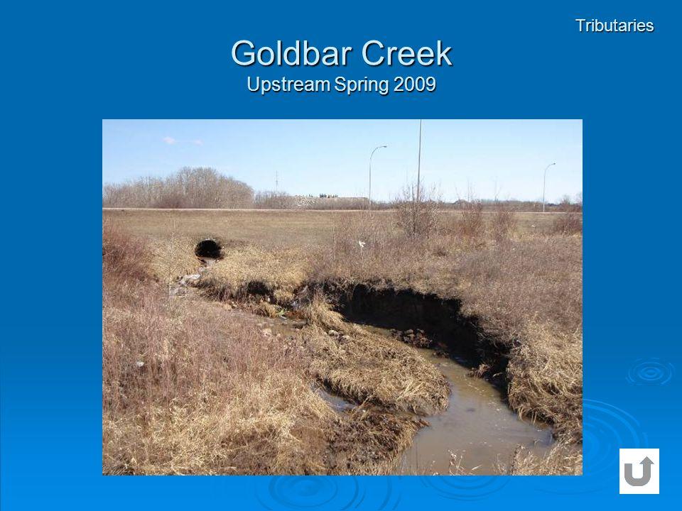 Goldbar Creek Upstream Spring 2009