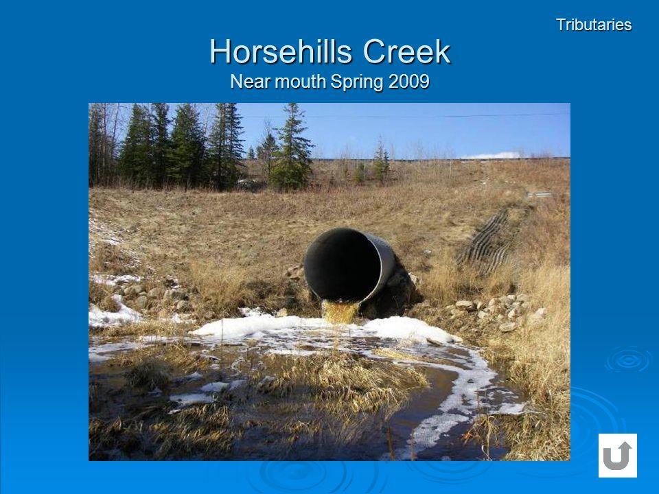 Horsehills Creek Near mouth Spring 2009