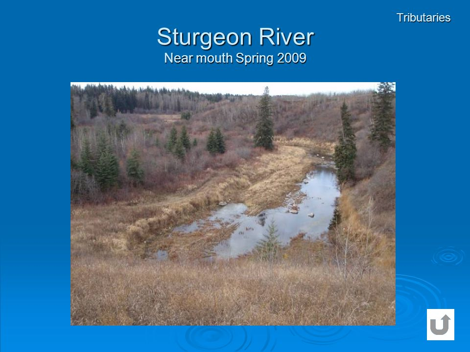 Sturgeon River Near mouth Spring 2009