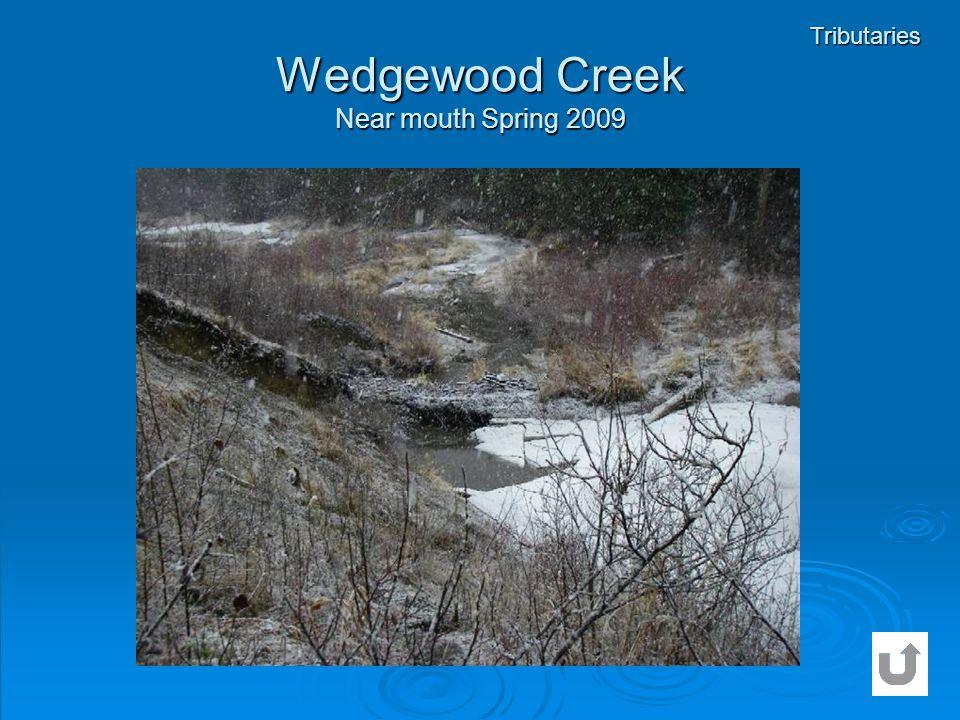 Wedgewood Creek Near mouth Spring 2009