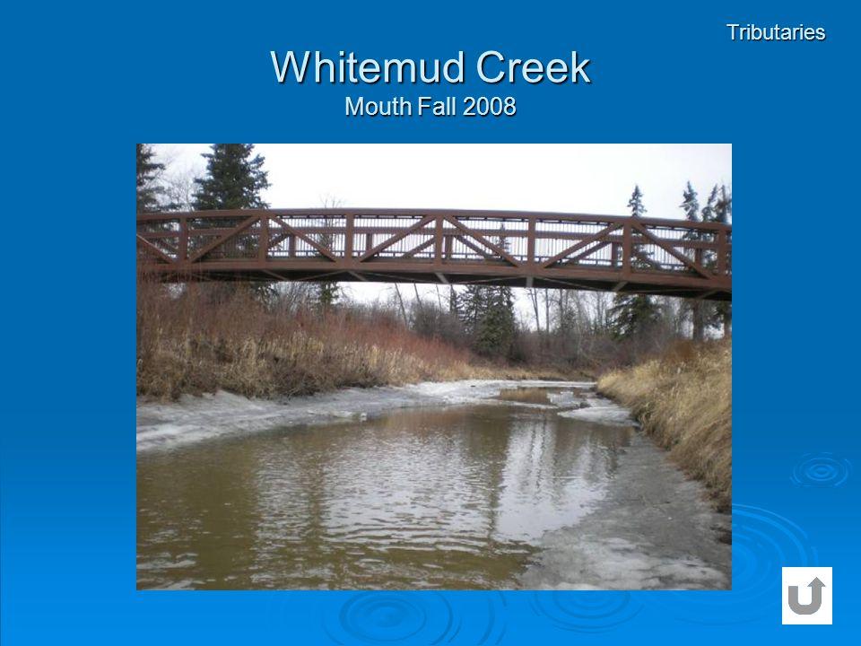 Whitemud Creek Mouth Fall 2008