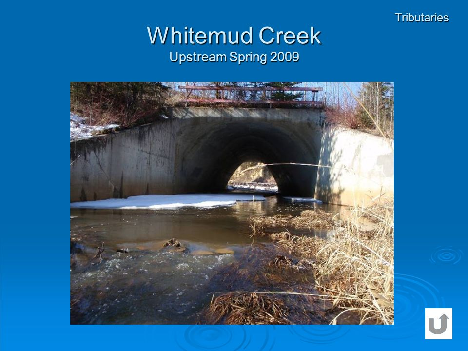 Whitemud Creek Upstream Spring 2009