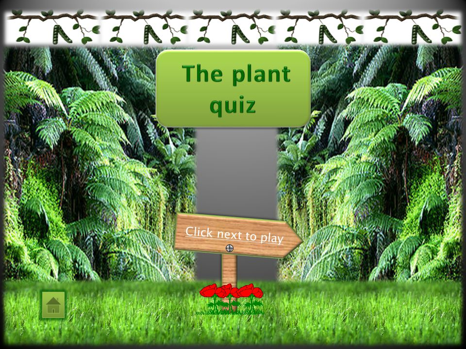 The plant quiz Click next to play