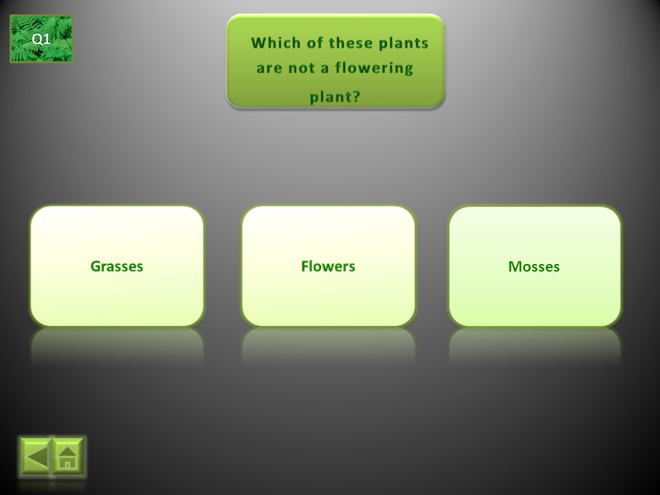 Which of these plants are not a flowering plant