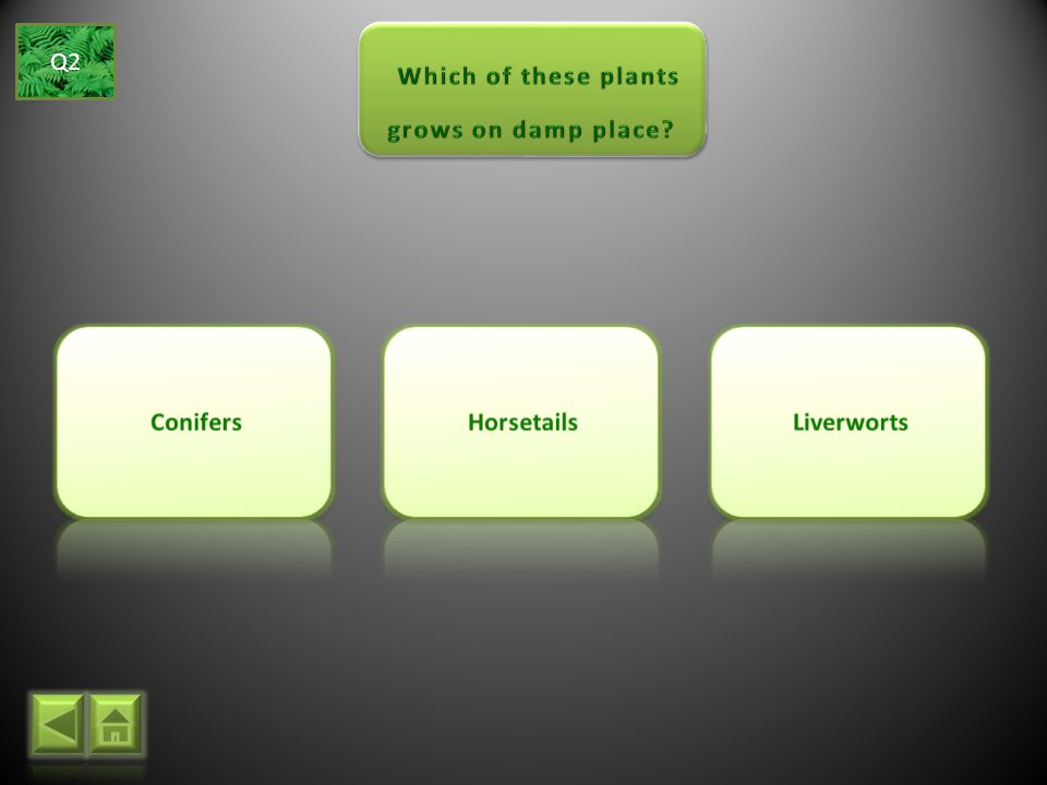 Which of these plants grows on damp place