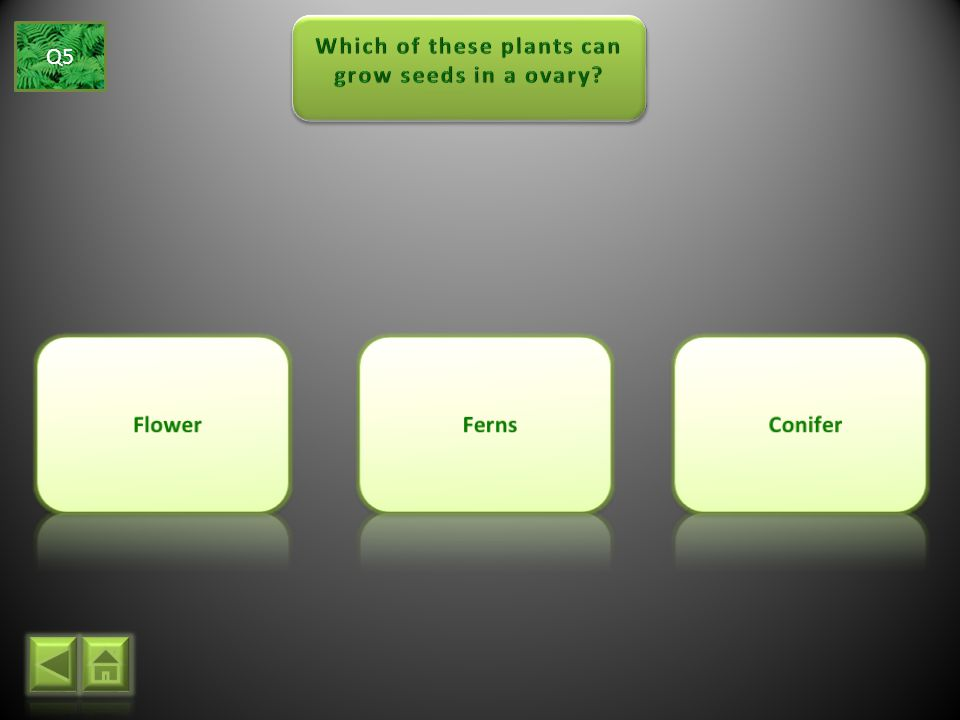 Which of these plants can grow seeds in a ovary