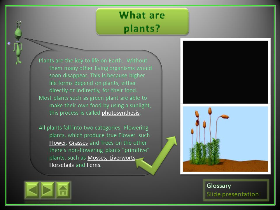 What are plants Glossary Slide presentation