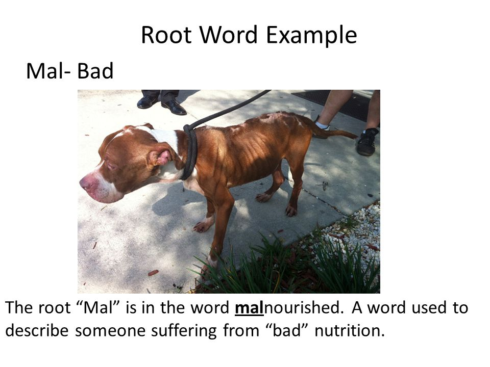 Root Word Example Mal- Bad
