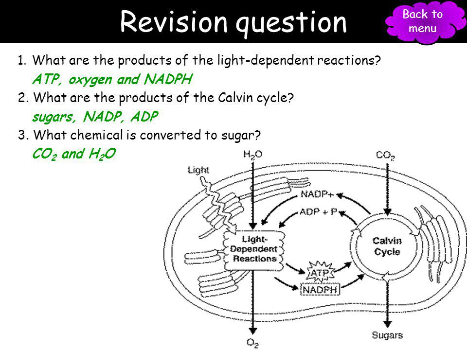 Revision question Back to menu. What are the products of the light-dependent reactions ATP, oxygen and NADPH