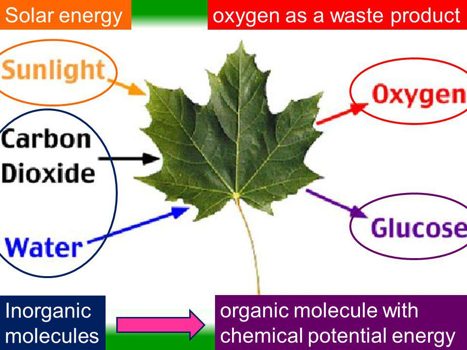 Solar energy oxygen as a waste product. Inorganic molecules.