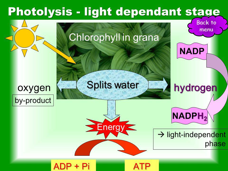 Photolysis - light dependant stage