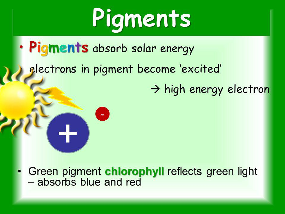 + Pigments Pigments absorb solar energy