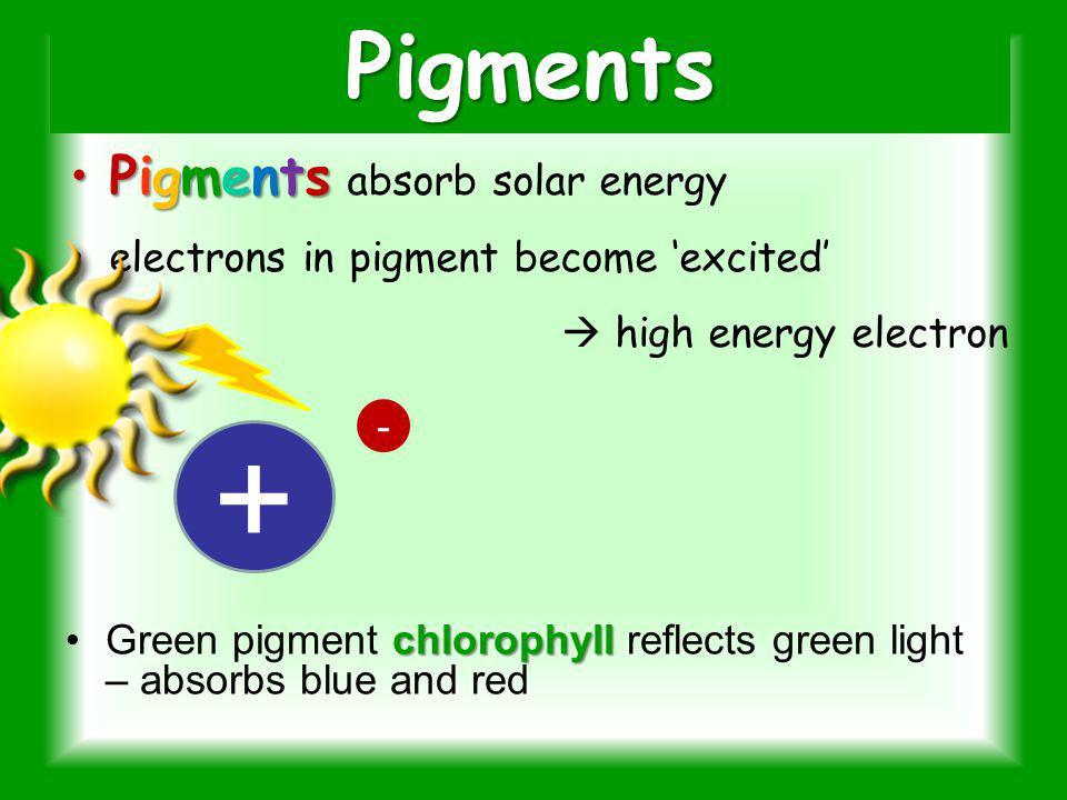 + Pigments Pigments absorb solar energy