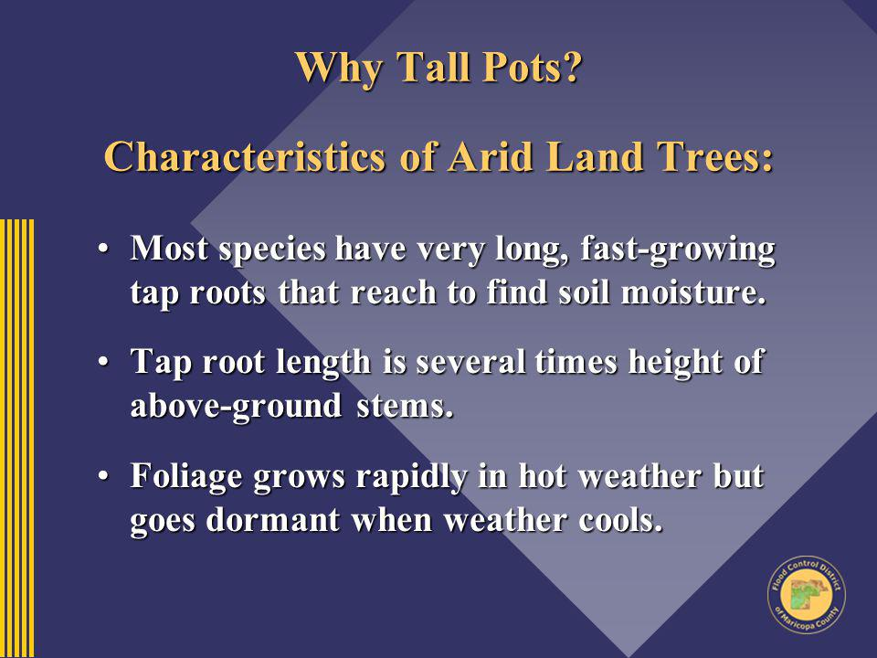 Why Tall Pots Characteristics of Arid Land Trees: