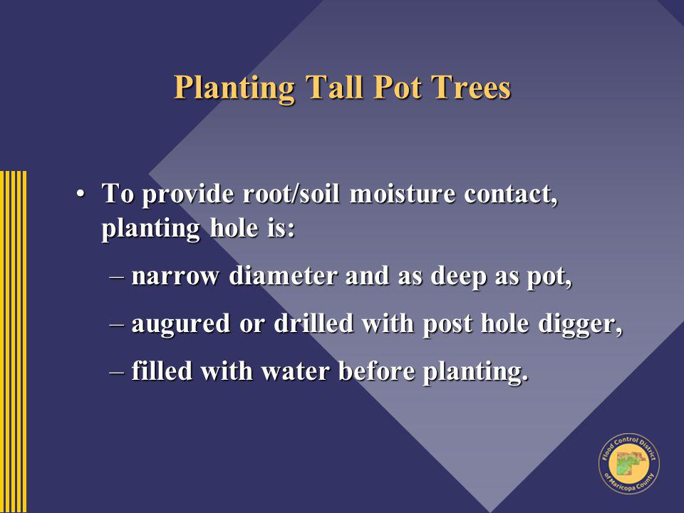 Planting Tall Pot Trees