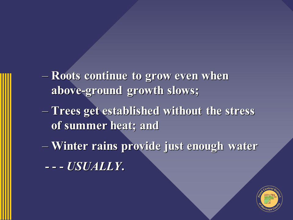 Roots continue to grow even when above-ground growth slows;