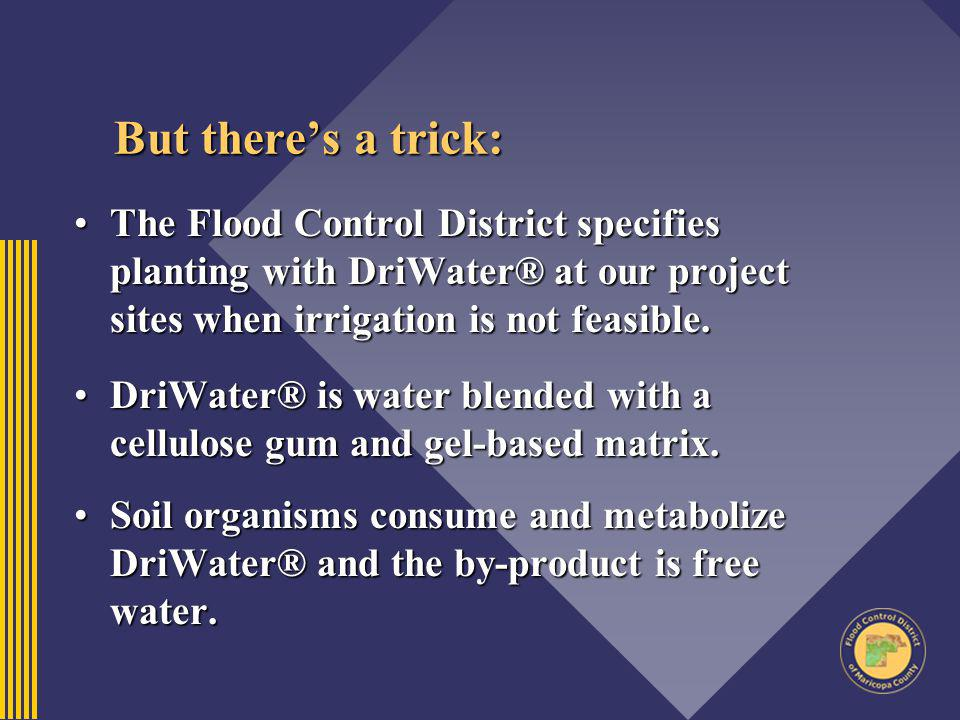 But there's a trick: The Flood Control District specifies planting with DriWater® at our project sites when irrigation is not feasible.