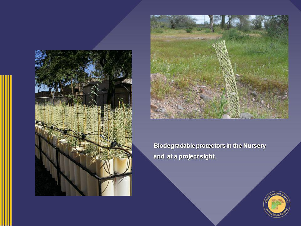 Biodegradable protectors in the Nursery