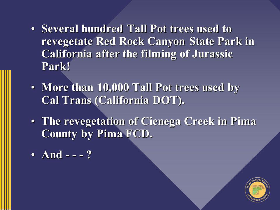 Several hundred Tall Pot trees used to revegetate Red Rock Canyon State Park in California after the filming of Jurassic Park!