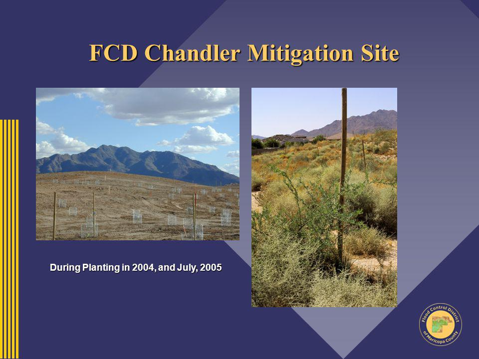 FCD Chandler Mitigation Site